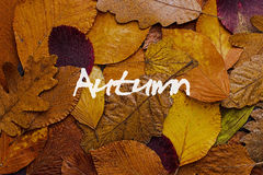 Autumn Leaves Colorful Background. Autumn Concept Wallpaper. Stock Image