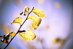 Autumn leaves. Autumn colorful leaves, beautiful sky Royalty Free Stock Photos