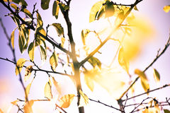 Autumn leaves. Autumn colorful leaves, beautiful sky Royalty Free Stock Photography