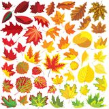 50 autumn leaves. 50 colorful autumn leaves, collection of vector illustrations Stock Photography