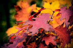 Autumn leaves. Colorful autumn leaves in the autumn forest Royalty Free Stock Image