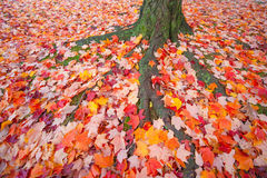 Autumn Leaves. Colorful autumn leaves on ground stock photo