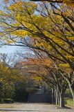 Autumn leaves. Colorful autumn leaves in Osaka , Japan Stock Photography