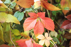 Autumn leaves. Colorful plants. autumn leaves background Stock Photo