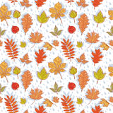 Autumn leaves colorful seamless pattern. On rainy background Royalty Free Illustration