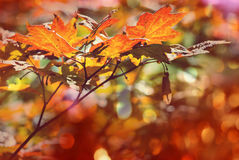 Autumn leaves. Colorful leaves in Autumn season royalty free stock photo