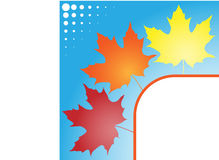 Autumn leaves colorful template Royalty Free Stock Photos