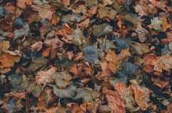 Autumn leaves colorful textured background. Copy space Stock Photography