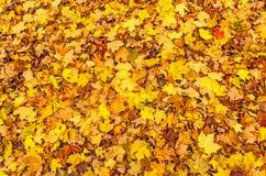 Autumn Leaves colorido em um parque estadual imagem de stock