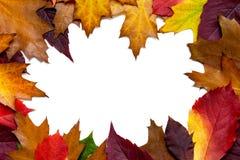 Autumn Leaves colorido - isolado no fundo branco com espaço da cópia para seu próprio texto fotografia de stock royalty free