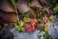 Autumn Leaves. Leaves in the autumn colors Stock Photo