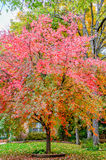 Autumn leaves colors Royalty Free Stock Photography