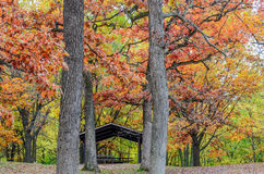 Autumn leaves colors Stock Image