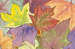 Autumn leaves colors. Watercolor illustration of colorful autumn leaves collection Royalty Free Stock Image