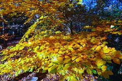 Autumn leaves. The colour of autumn leaves Royalty Free Stock Photos