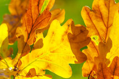 Autumn leaves. Colourful autumn leaves background,fall season Royalty Free Stock Images