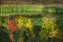 Autumn leaves and colourful trees reflecting in the water Stock Image