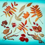 Autumn leaves composing on turquoise blue background, top view Royalty Free Stock Images