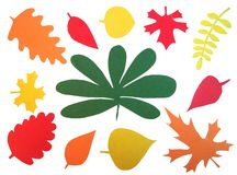 Autumn leaves composition Royalty Free Stock Photography