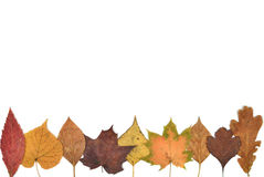 Autumn Leaves composition stock photography