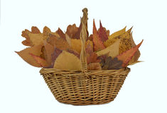 Autumn Leaves composition Royalty Free Stock Image