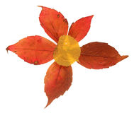 Autumn leaves composition. Flower composed of colorful autumn leaves royalty free stock photo