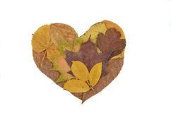Autumn Leaves composition heart Stock Photography