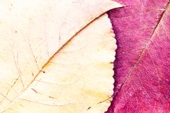 Autumn leaves background composition - purple and yellow pear stock photo