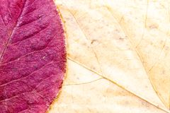 Autumn leaves background composition - purple pear and yellow linden stock photo