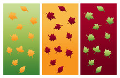 Autumn Leaves Compositions. There are three autumn leaves Compositions. Various colors Stock Illustration