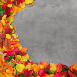 Autumn leaves and concrete background Stock Photos