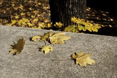 Autumn leaves on a concrete bannister. Autumn leaves lying on a concrete bannister, background blurred out part of Tree and autumn leaves lying on the ground royalty free stock photography