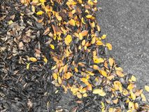 Autumn leaves on the concrete floor. Stock Image