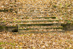 Autumn leaves on concrete steps stairs Stock Image