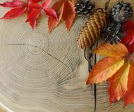 Autumn leaves and cones on wooden table stock photos