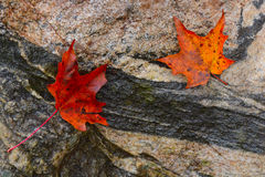 Autumn leaves contrast with boulder. Colorful autumn leaves lay in contrast to interesting textures of rock Stock Photo