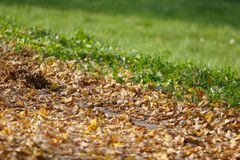 Autumn leaves contrasting with grass Stock Photo