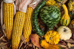 Autumn leaves, corn and gourds. Autumn corn and gourds on dry leaves on the ground Stock Images