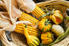 Autumn leaves, corn and gourds. On the ground Stock Image