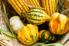Autumn leaves, corn and gourds. On the ground Stock Photos