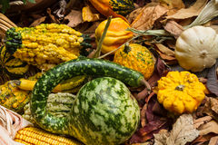 Autumn leaves, corn and gourds. On the ground Royalty Free Stock Photo