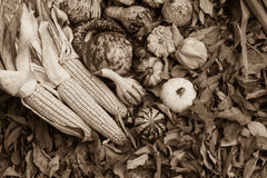 Autumn leaves, corn and gourds. Sepia toned Autumn leaves, corn and gourds on the ground Stock Photography