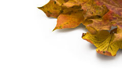 Autumn leaves corner background Royalty Free Stock Images