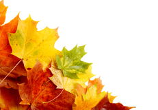 Autumn leaves in the corner isolated on white Royalty Free Stock Photography