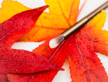 Autumn leaves with cosmetic brush Stock Photo