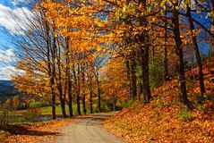 Autumn Leaves on a country road royalty free stock photos