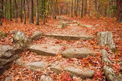 Autumn Leaves Cover a Footpath in the Appalachian Mountains. In north Georgia USA stock photography