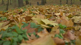 Autumn Leaves Cover stock footage