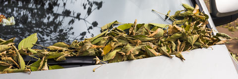 Autumn leaves covered the car Stock Photos