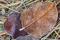 Autumn leaves covered in early frost. Autumn leaves covered in early morning frost Stock Photos